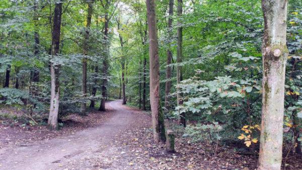 Rath Aaper Wald